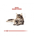 Royal Canin-Maine Coon Adult (2)